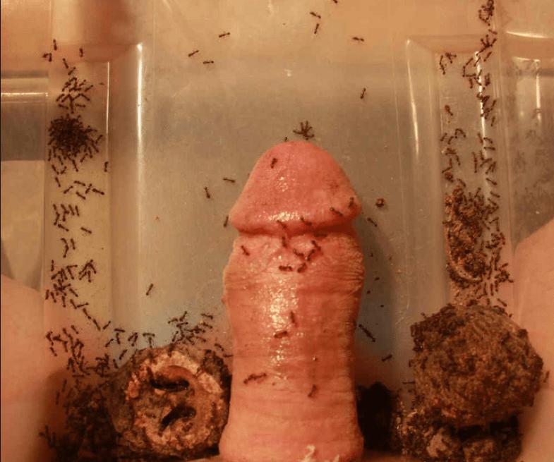 Nude suck my dick girlfriend
